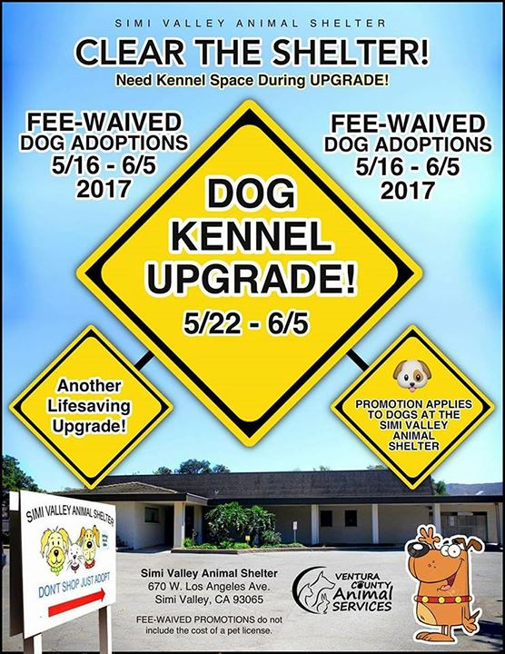 Adoption And Shelter Information Moorpark Ca Official