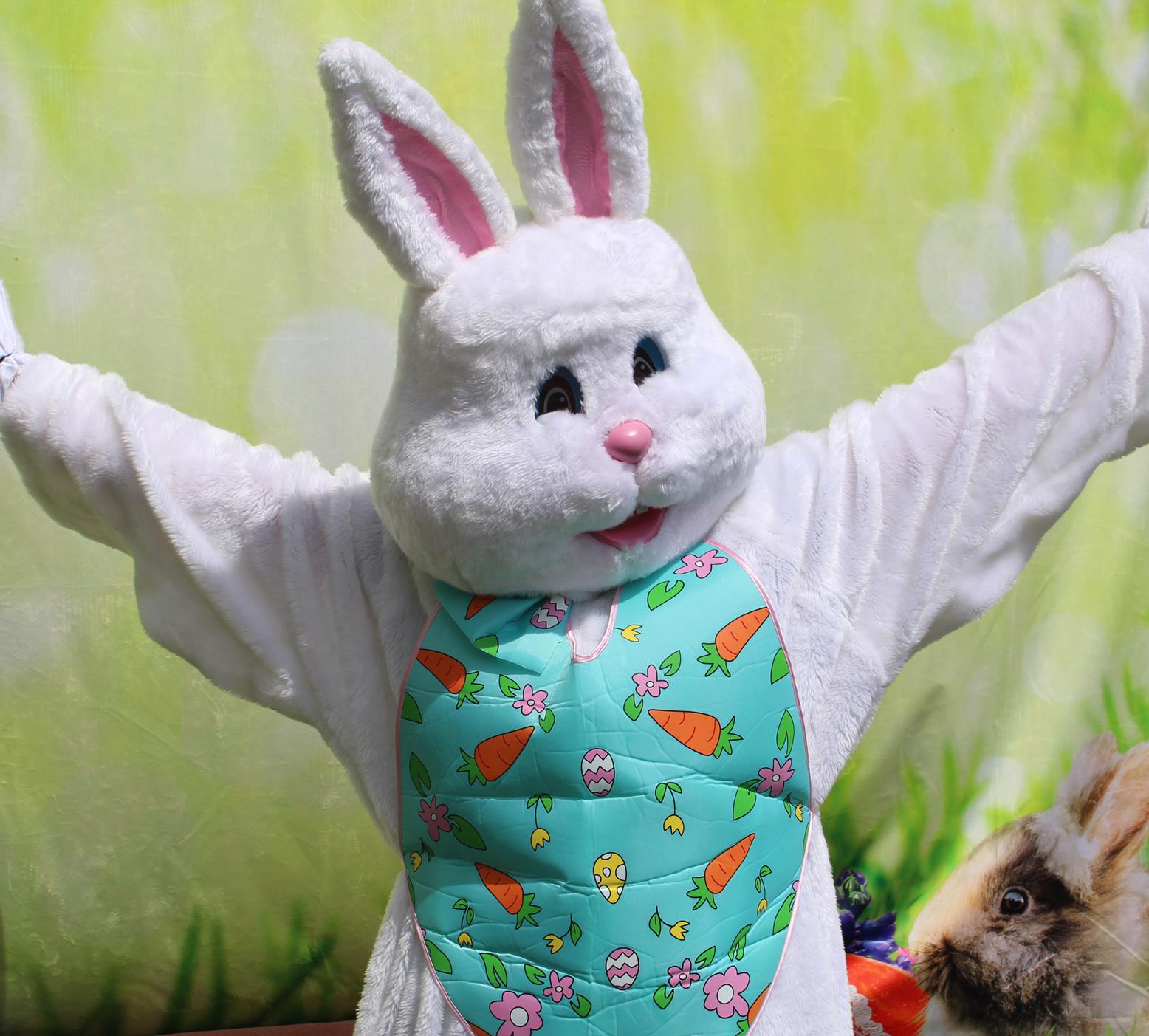 Easter Bunny  Opens in new window